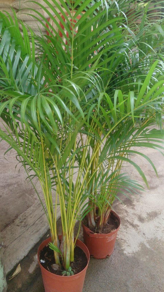 List Of Top 10 Air Purifying Indoor Plants In India With Names Pictures
