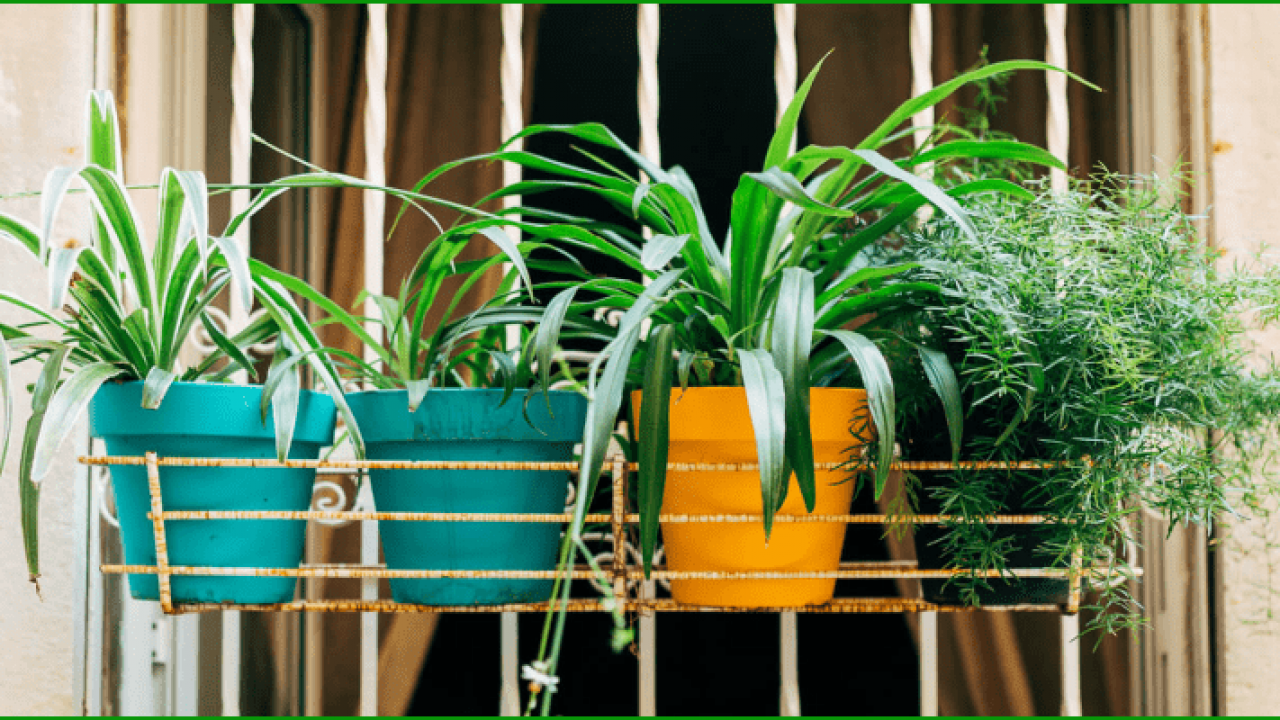 List Of Top 10 Air Purifying Indoor Plants In India With Names Pictures,Small Apartment Furniture Layout For Small Living Room