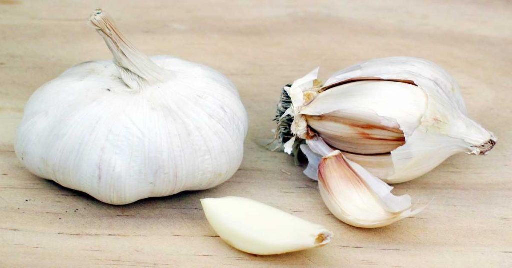 Healthy Herb and Spice- Garlic