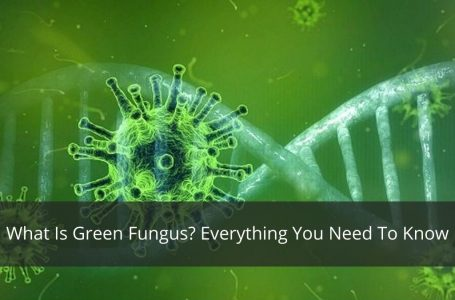 What Is Green Fungus? Everything You Need To Know